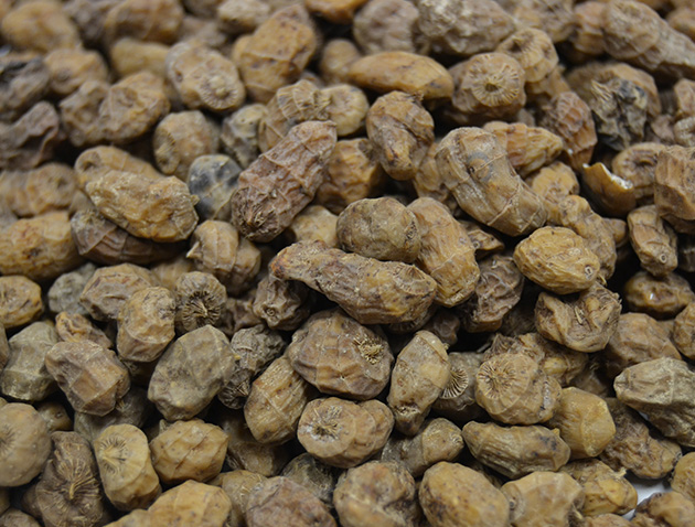 Tigernuts. Levantex | Import and Export | Trading dried fruits, dehydrated fruits and tigernuts.
